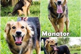 MANATOR