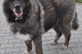 Rysiek - pies czerwca