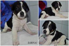 SABINA1