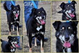 GOLCA (GIFA)