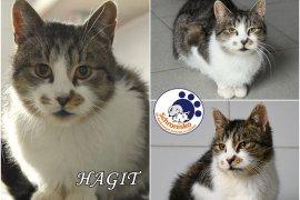 HAGIT