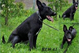 REWA1