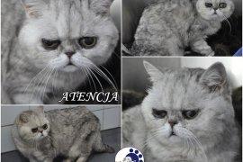 ATENCJA