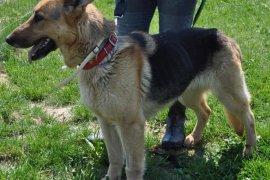 Omasta - pies lipca