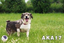 AKA17